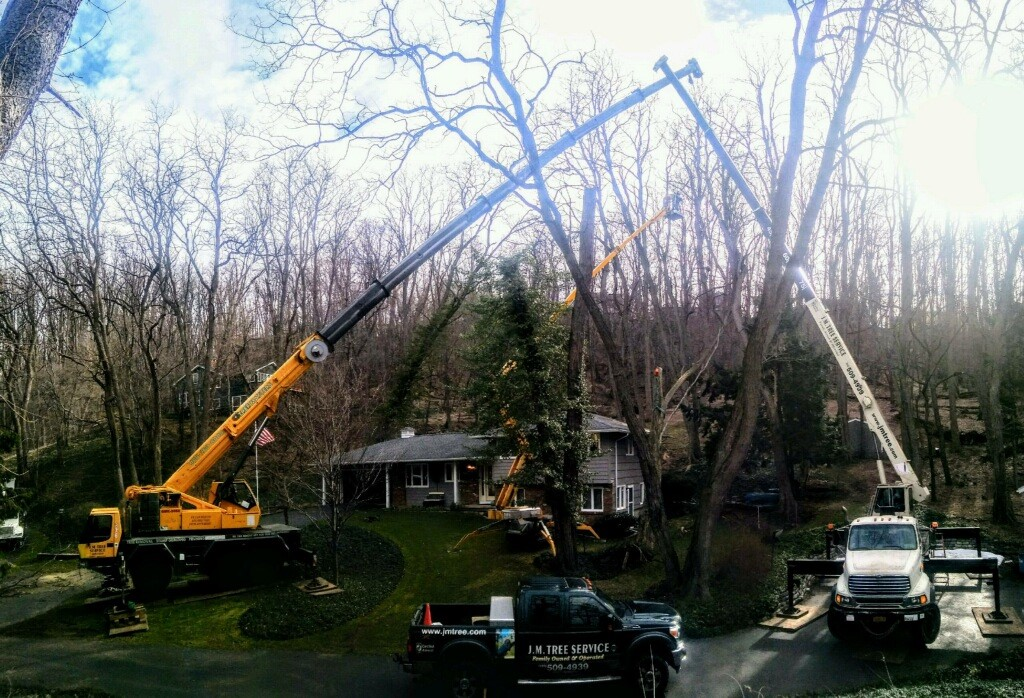 tree removal rochester ny family business