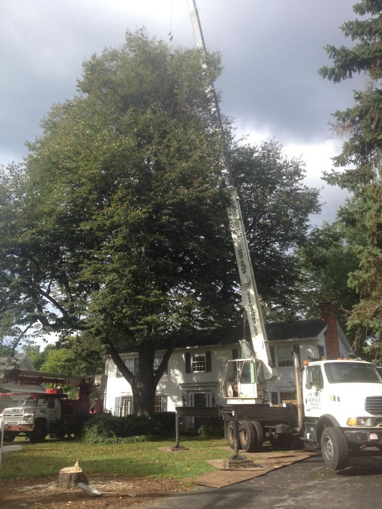 remove a tree rochester ny