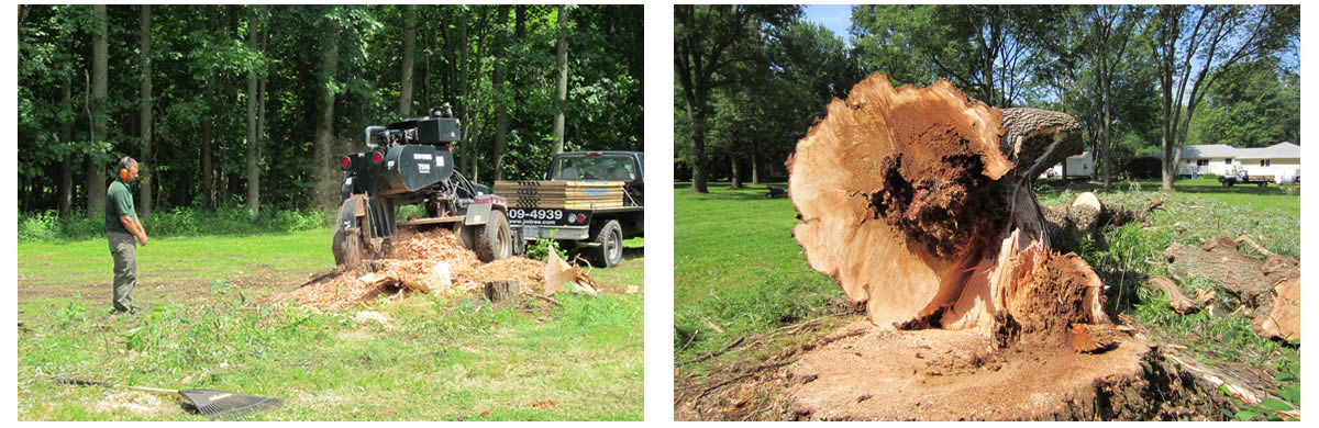 stump grinding rochester ny